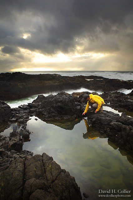 Tide Pools Fitzgerald Marine Reserve In Half Moon Bay Tide Pools Amazing Adventures Places To Go