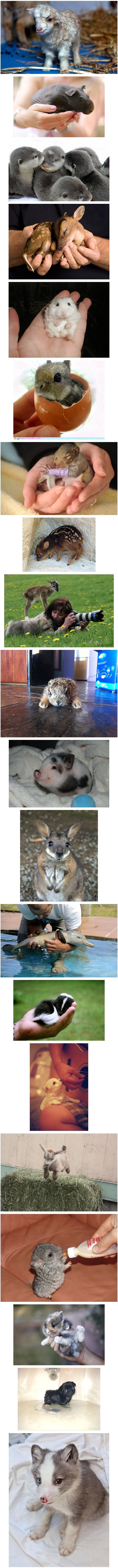little ones. Who doesn't love animals after looking at this!