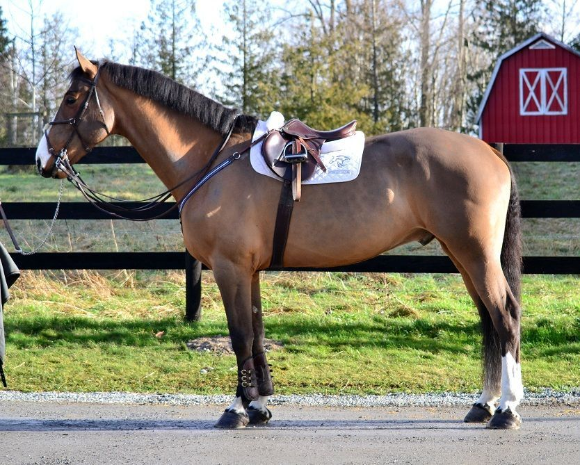 Nice English horse! Perfect idea for how I want my horse's mane to look like this summer.