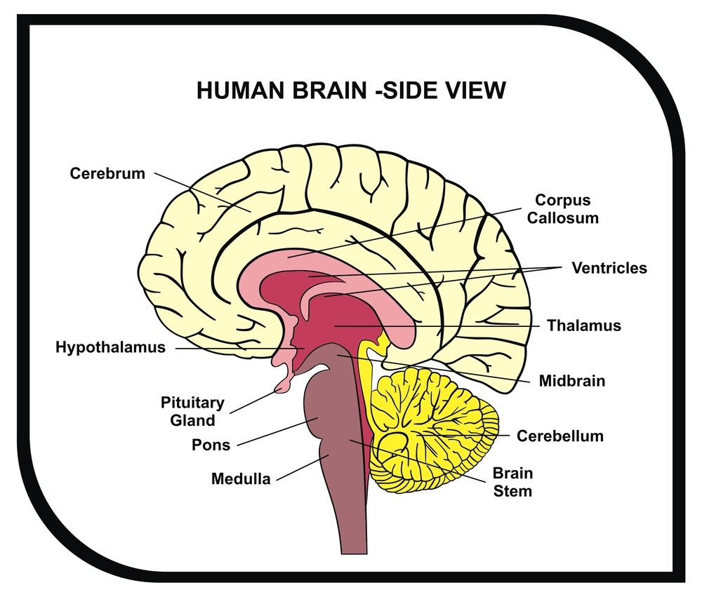 Pin by cognifit brain training on cognifits blog pinterest post brain diagram ccuart Choice Image