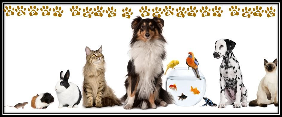 Natural Pet Care With Essential Oils Www Fb Com