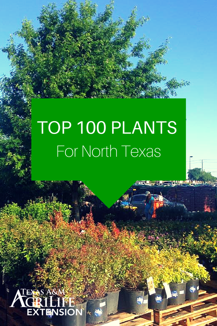 Live In North Texas Here S A List Of The Top 100 Plants For Compiled By Agrilife Dallas Water University