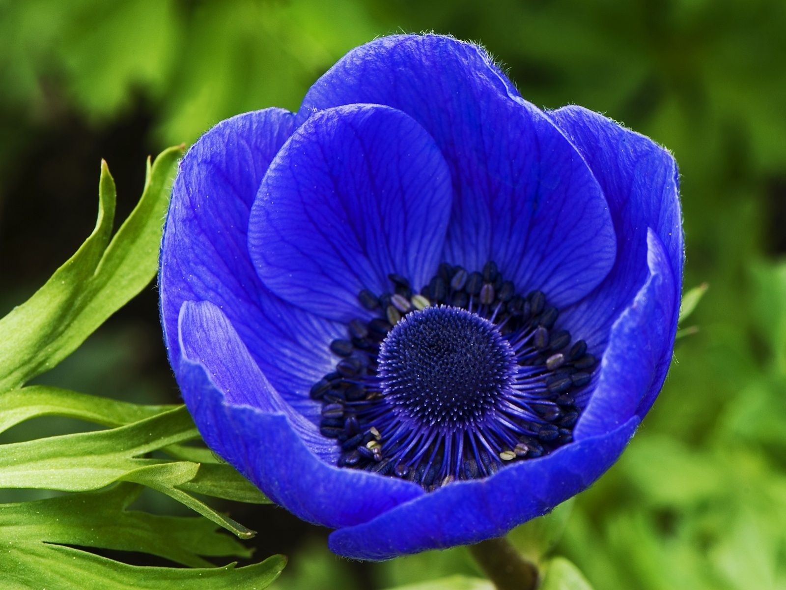 56 best flowers images on pinterest beautiful flowers blue blue spring flowers izmirmasajfo Image collections