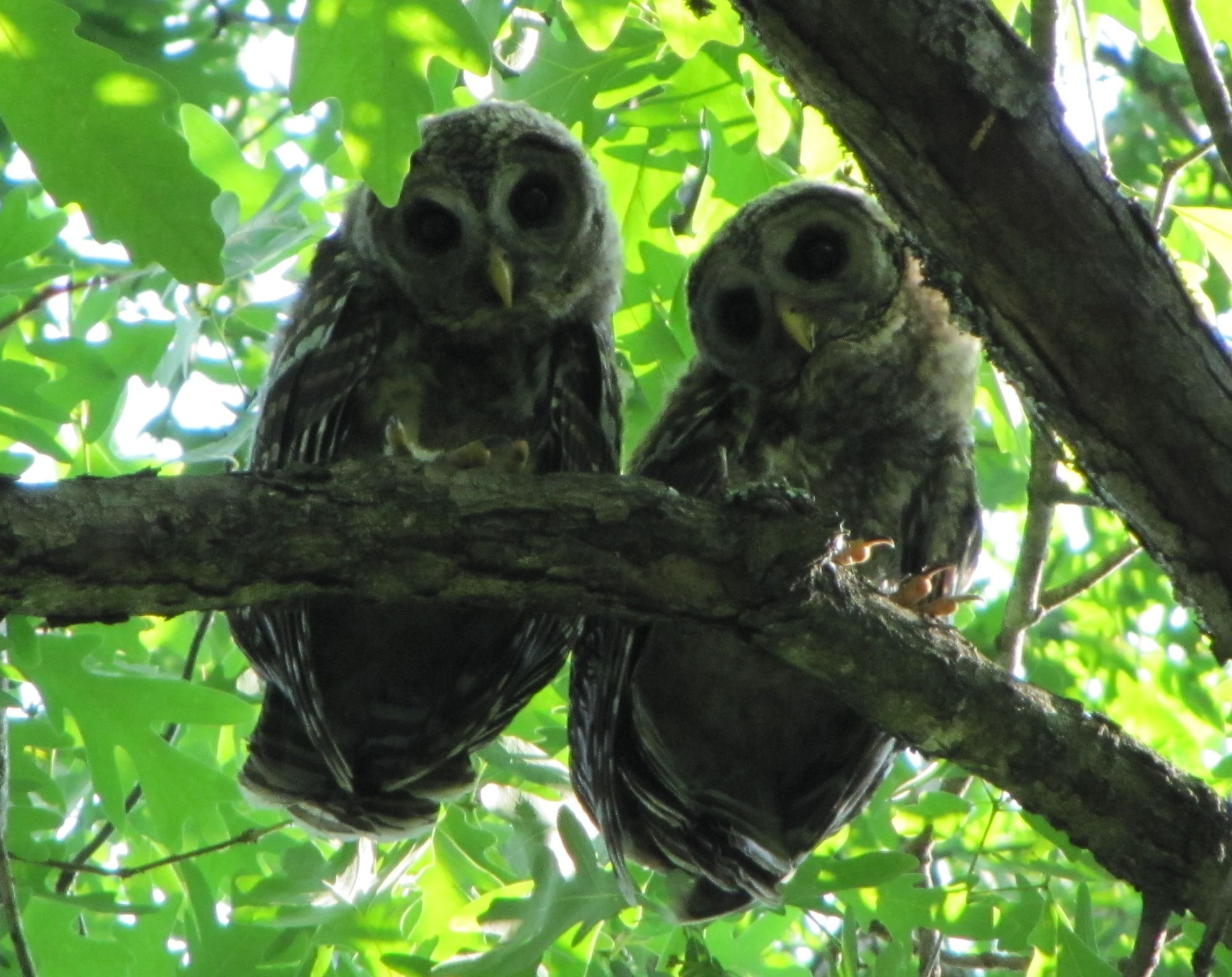 So cute. Notice how big their eyes are. They find prey by