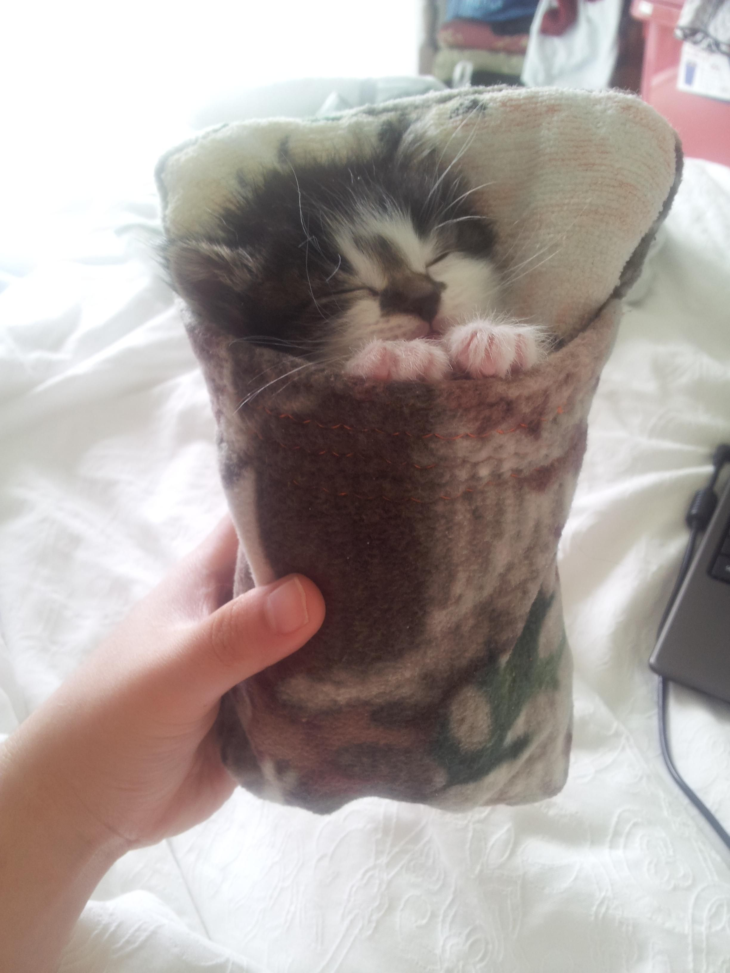 My Girlfriend Made A Sleeping Bag For Our 2 Week Old Foster Kitty Sleepy Kitten Cute Animals Baby Cats