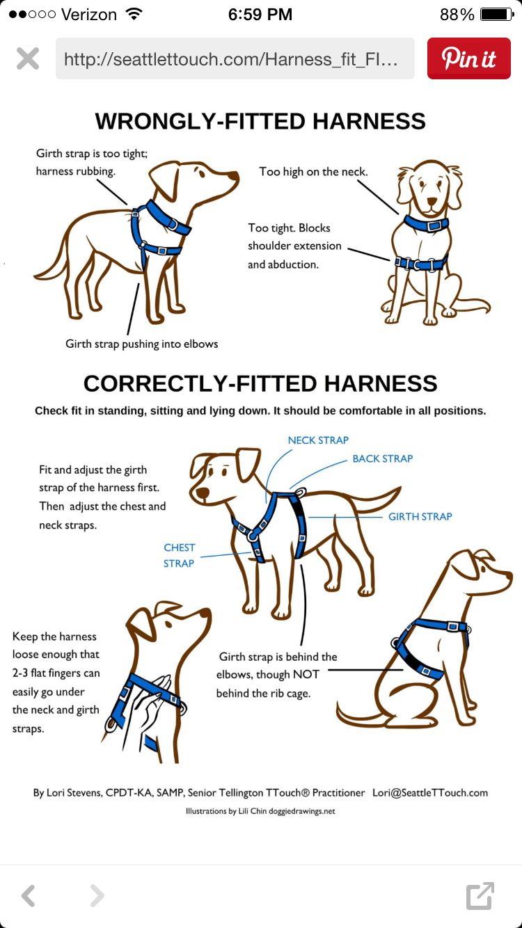 Correctly Fitting Harness Dog Training Dogs Dog Care