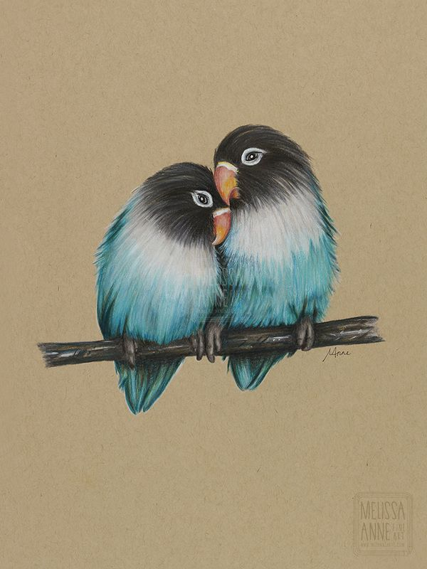 Love birds polychromos pencils on toned tan paper