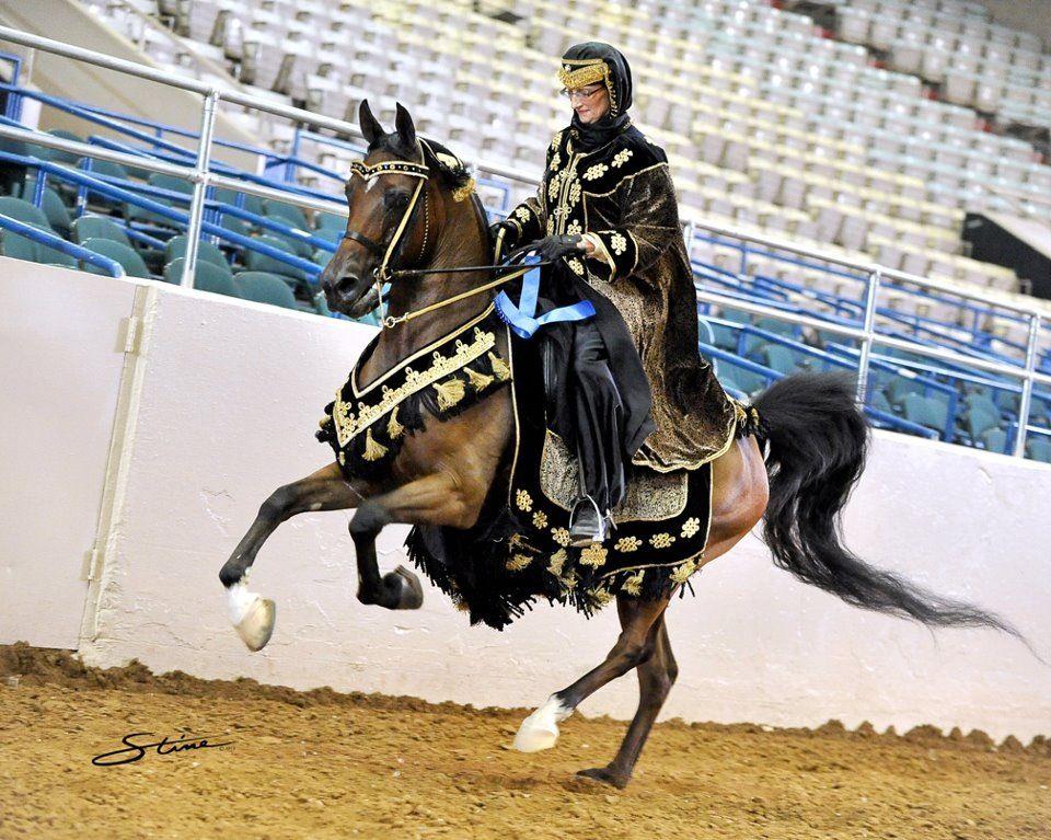 Helios VA+ Top Ten Arabian Native Costume | Horse costumes