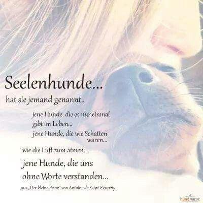 Pin Von Monika Sailer Auf Traurig Regenbogenbrucken Hund Niedliche Katzchen Hund Zitat
