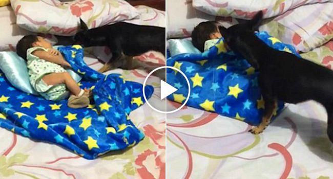 Adorável Cachorrinho Aconchega Bebé Na Hora De Dormir http://www.funco.biz/adoravel-cachorrinho-aconchega-bebe-na-hora-dormir/