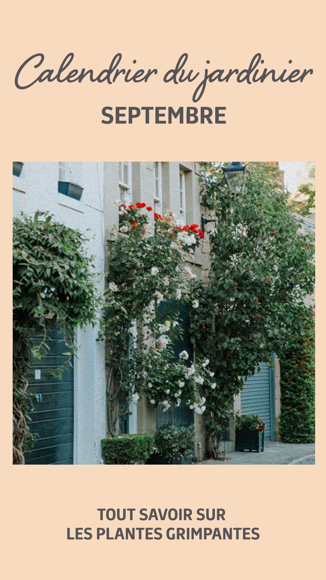 Plante Sur Les Murs qu'elles sont charmantes ces plantes grimpantes qui