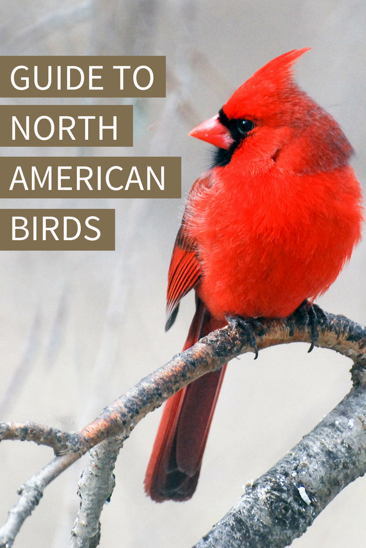 Use Audubon's online Guide to North American Birds to ...