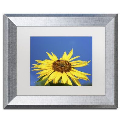 "Trademark Art ""Facing the Sun II"" by Kurt Shaffer Framed Photographic Print Size: 1"