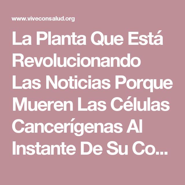 La Planta Que Está Revolucionando Las Noticias Porque Mueren Las Células Cancerígenas Al Instante De Su Consumo | Vive Con Salud