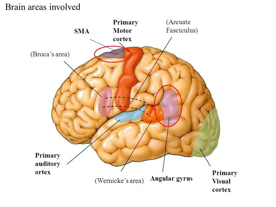Image result for angular gyrus | usmle | Pinterest