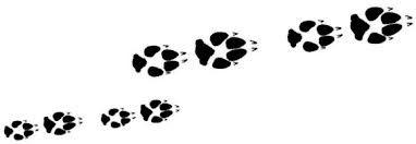 lion paw prints using
