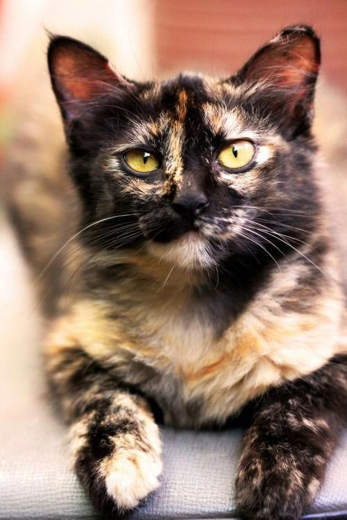 Cats Craigslist #FoodForCats | Mascotas