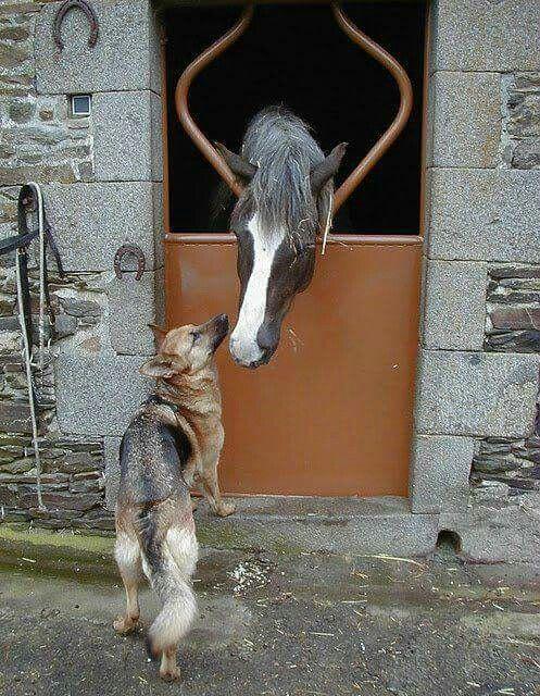 Love animaux