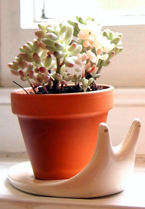 Snail Plant Pot at What You Sow. Perfect for a small cactus or succulent.