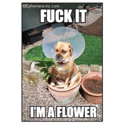 Fuck It, Im a Flower