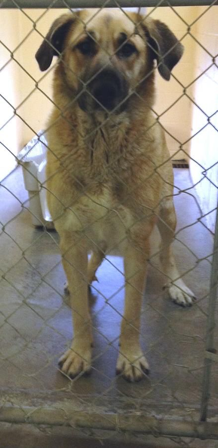 Adopt Nala On Petfinder Rescue Dogs Shepherd Mix Dog Shepherd Dog