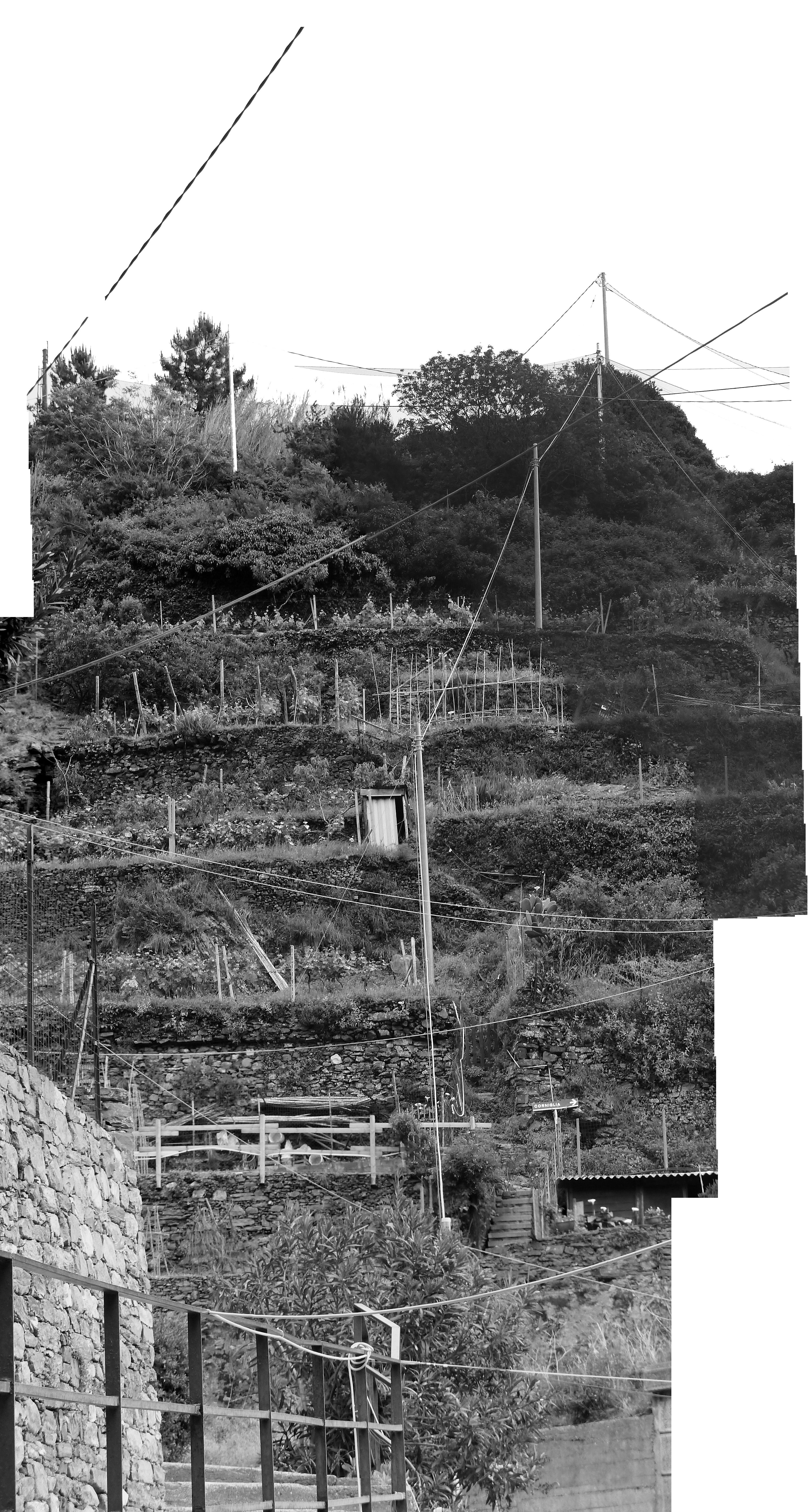 La terrasse, les fils et la vigne