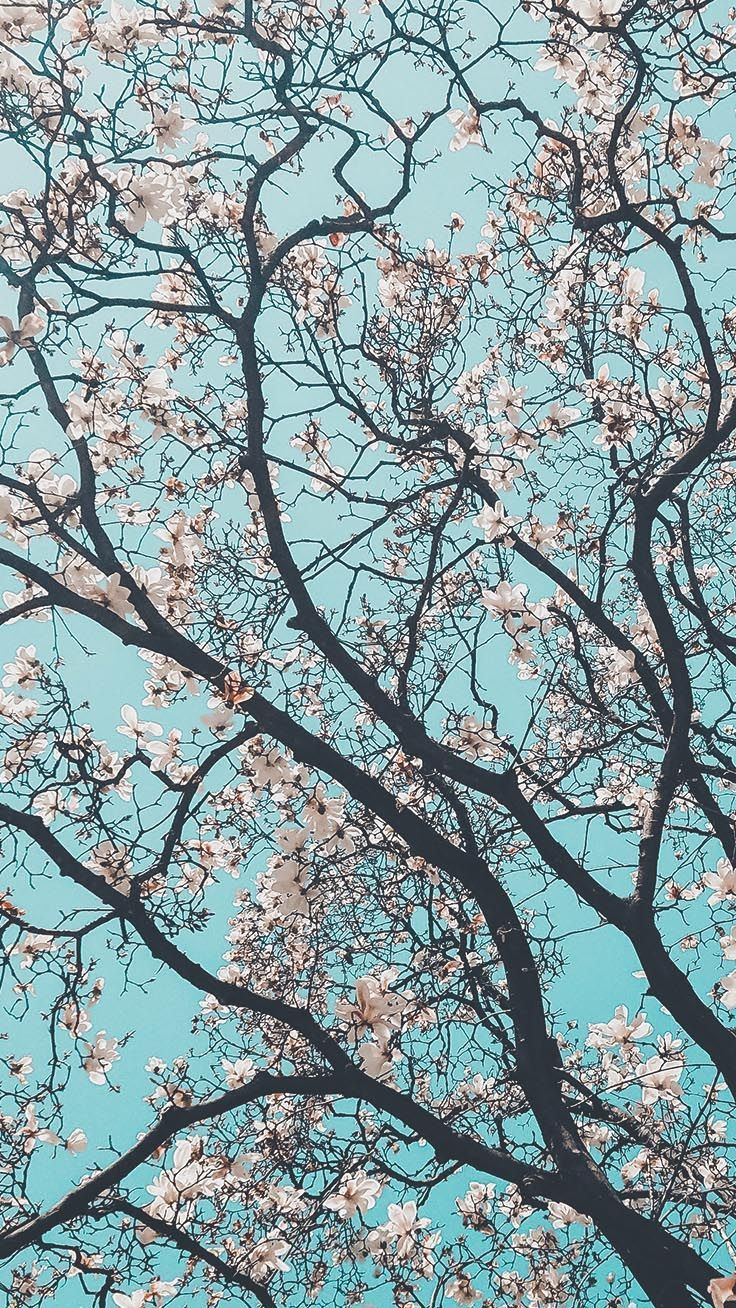 13 Gorgeous Spring Blossom iPhone Wallpapers #iphonewallpaper