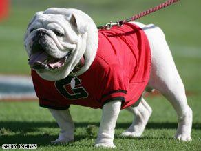 Uga Mascot To Ga Bulldogs My Favorite College Football Team Ga