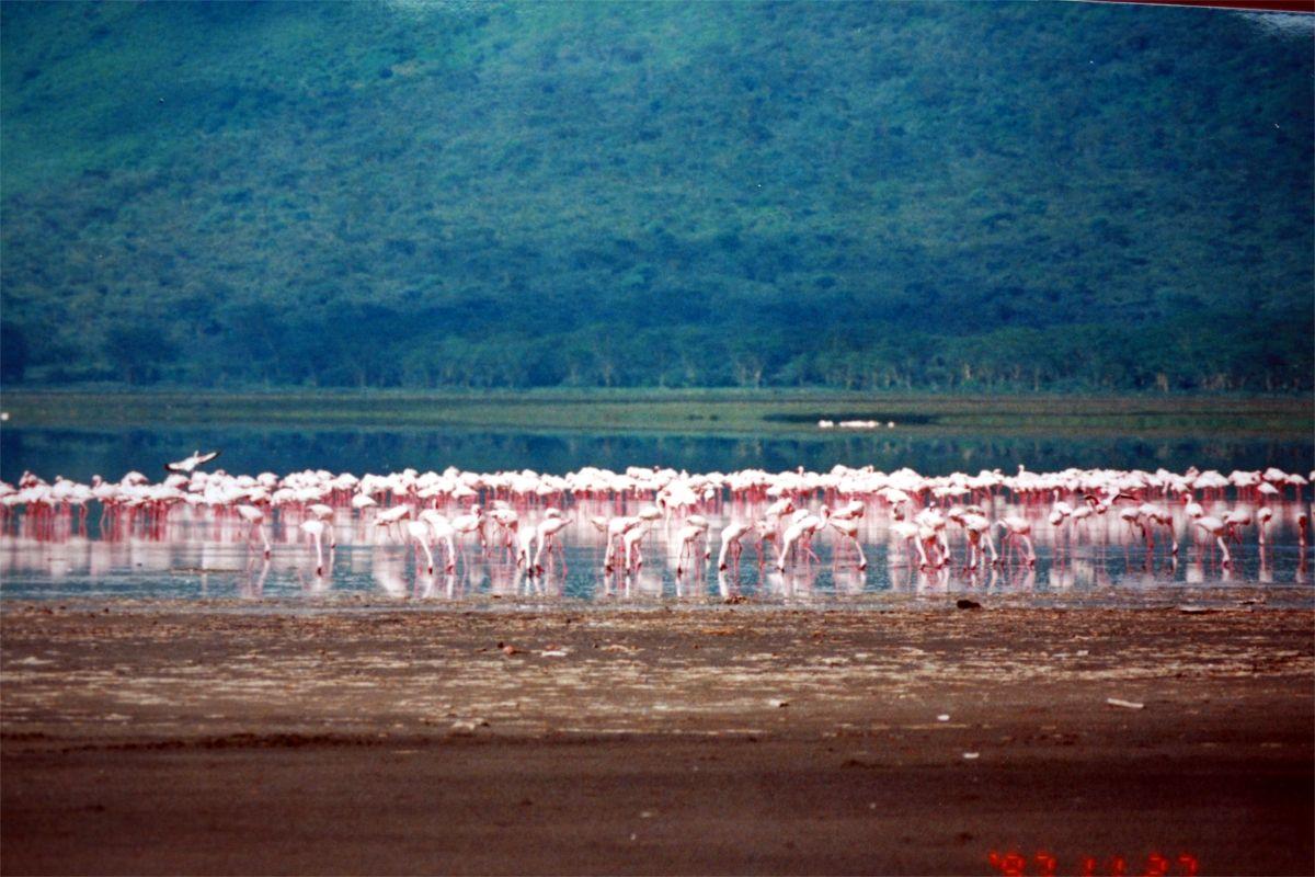 Lake Nakuru National Park • Hansel Travel