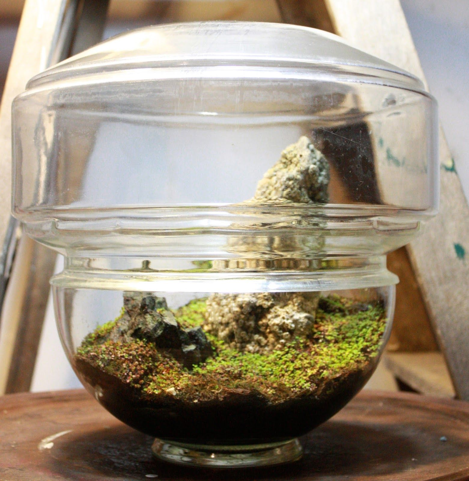 We create objects of wilderness one of a kind artisan terrariums of