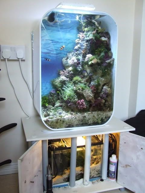 biorb life reef conversion story a lot of work for. Black Bedroom Furniture Sets. Home Design Ideas