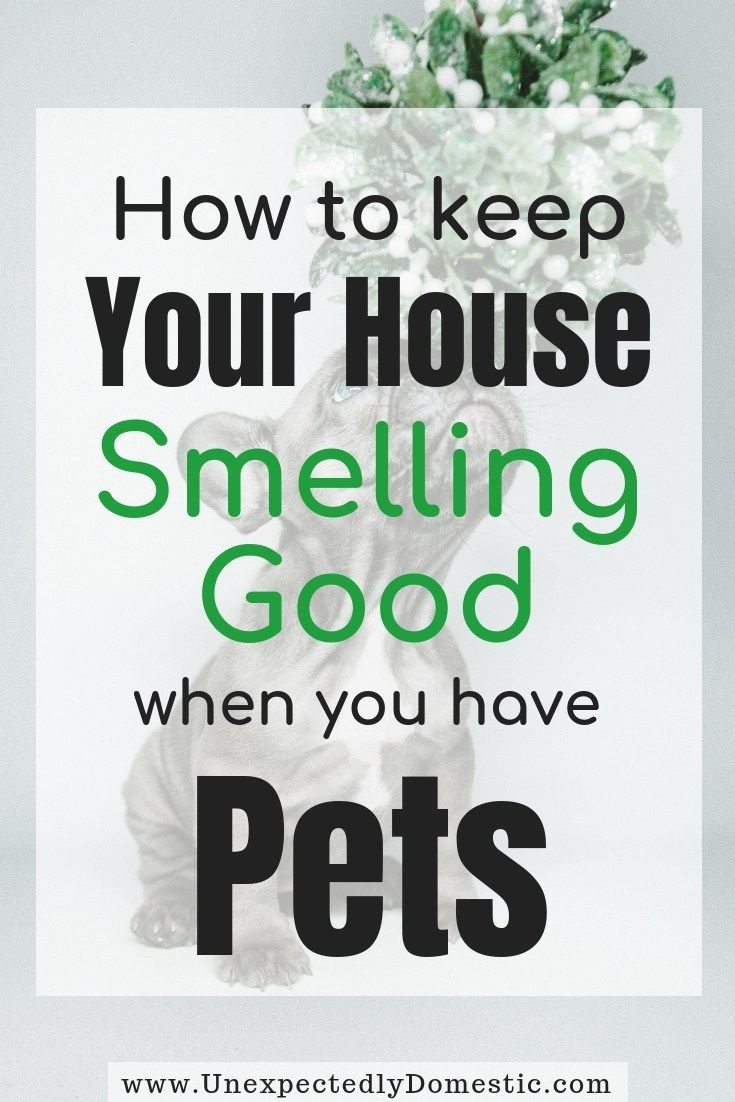 How to Keep Your House Smelling Good Always (23 Genius Hacks!)