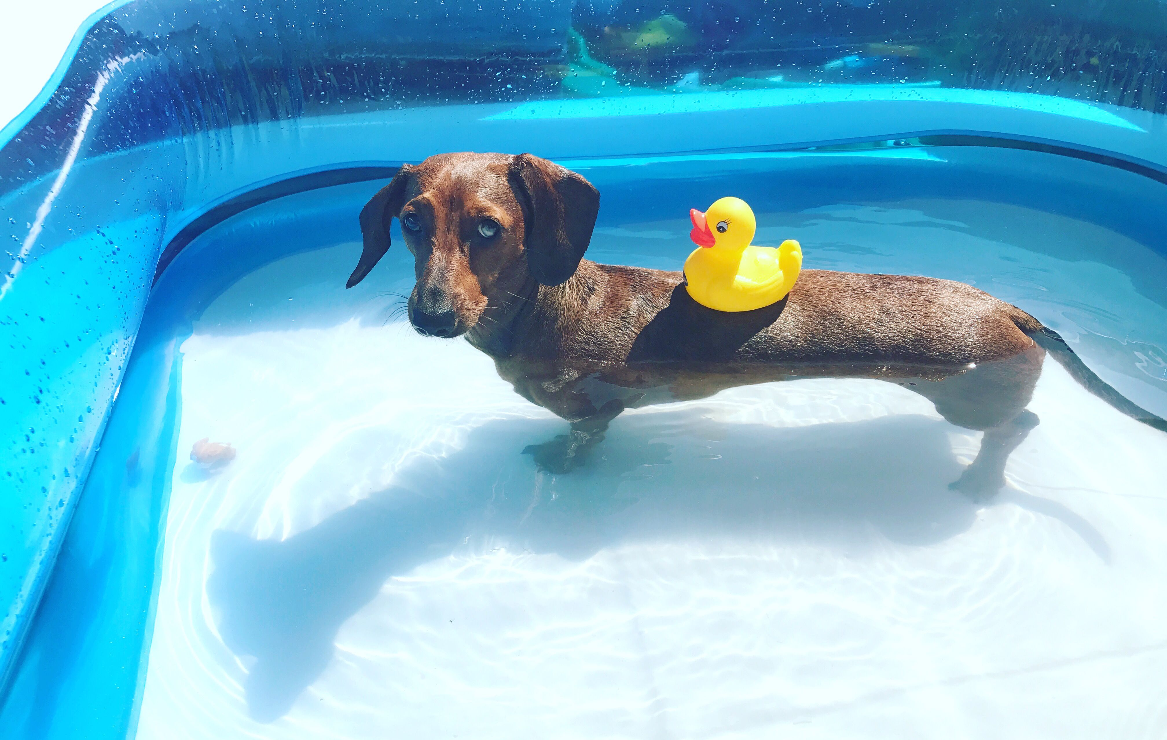 Pin By Sandy Hough On Doxies Dachshund Dog Cat Dogs