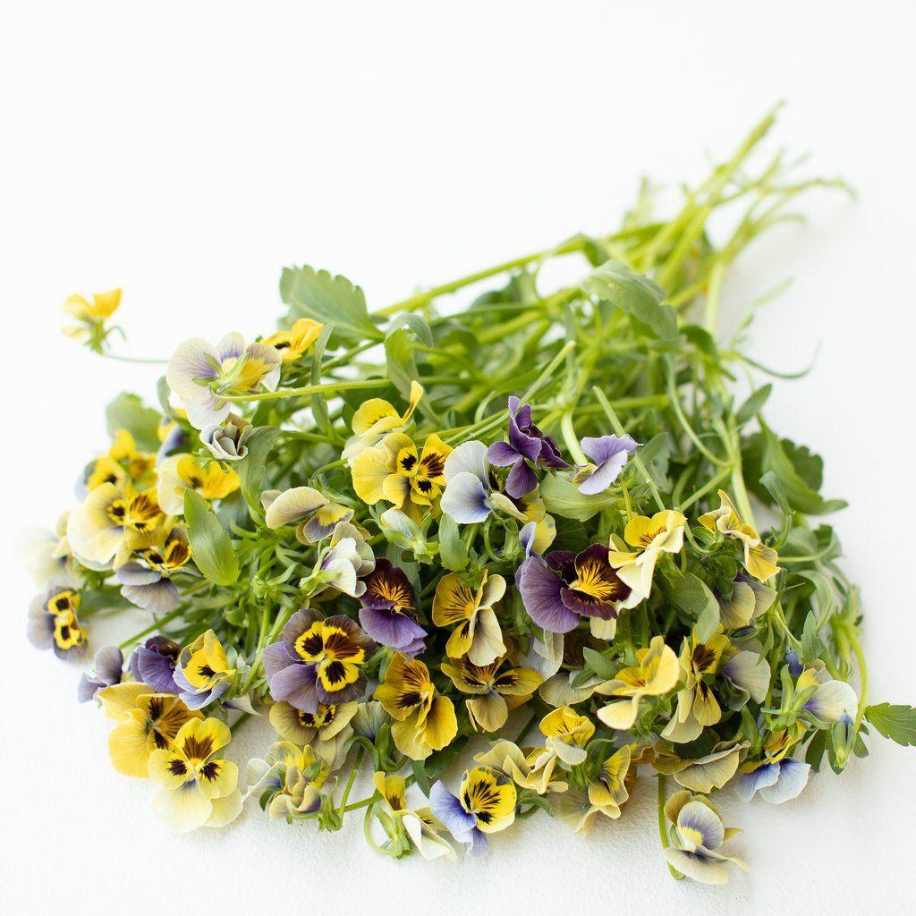 Pansy Envy In 2020 Pansies Flower Food Planting Herbs
