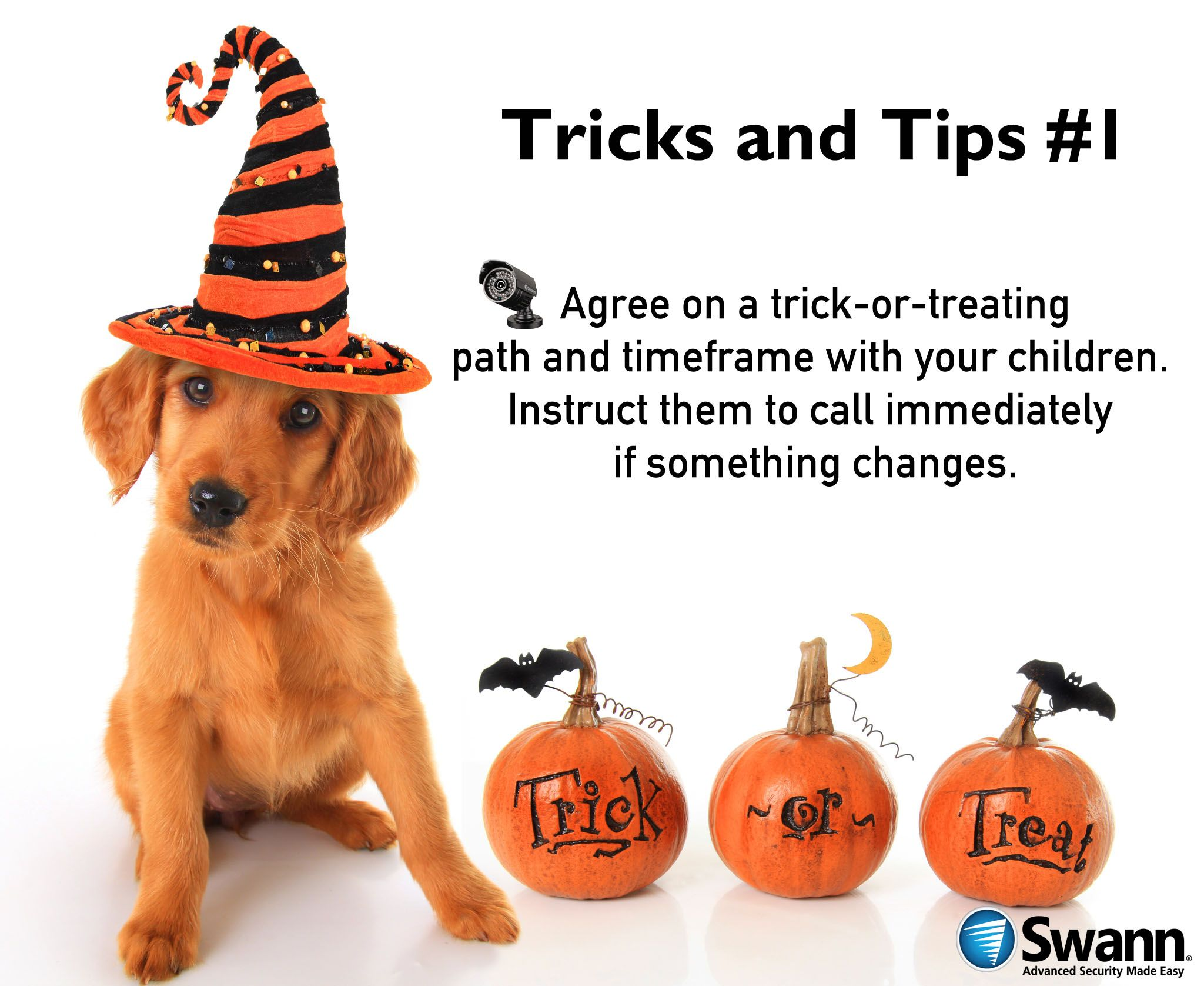 Pin by Swann Security on Security Tips Halloween pet
