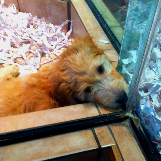 How much is that puppy in the window?!