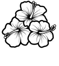 hibiscus hummingbird and hibiscus drawing bing images sketch coloring page - Hibiscus Flower Coloring Page