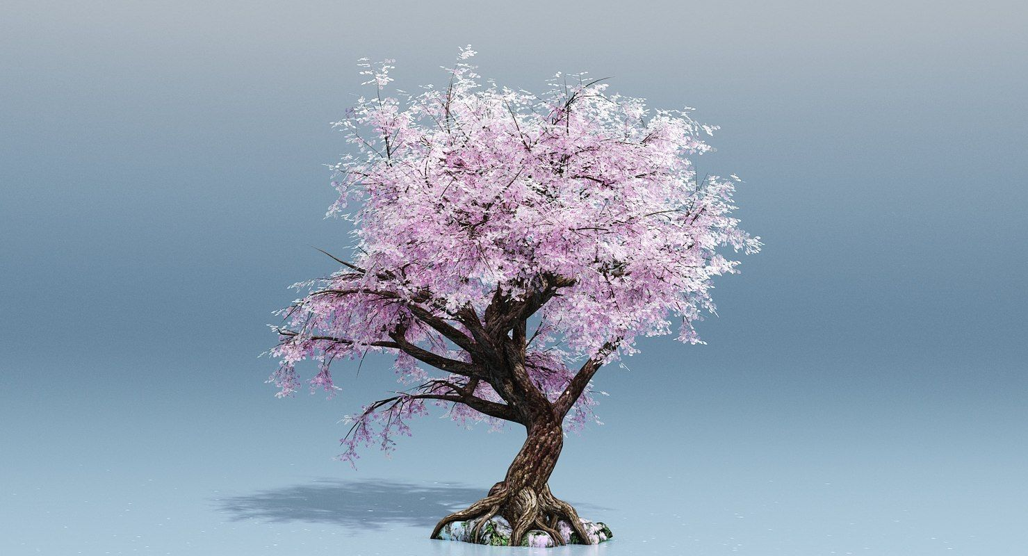 Cherry Blossom Tree 3d Cherry Blossom Tree Blossom Trees Trees To Plant