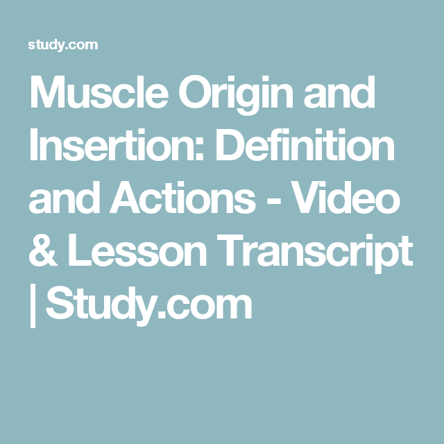 Muscle Origin And Insertion Definition And Actions Video Lesson