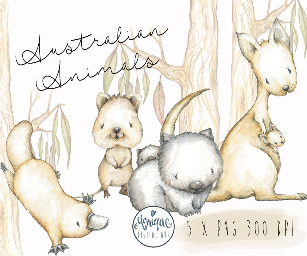 australian animals clipart kangaroo wombat platypus quakka mother and baby nursery animals watercolor baby clipart planner stickers by  [ 1000 x 833 Pixel ]