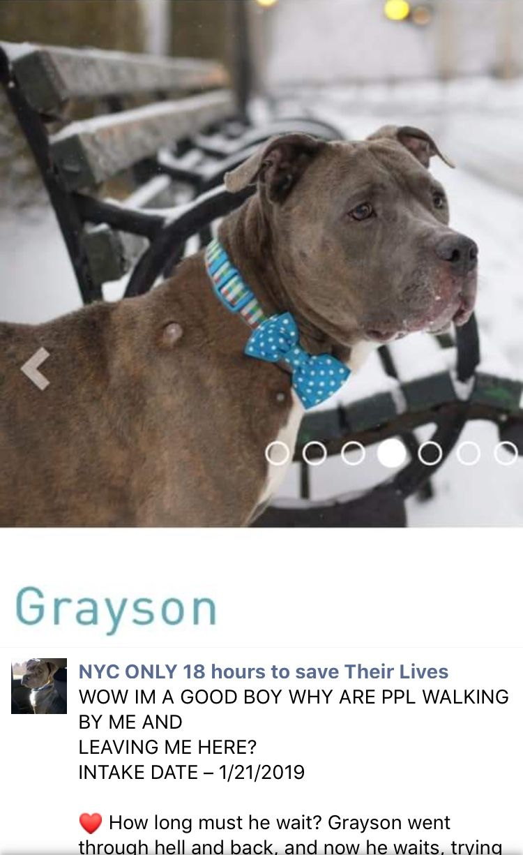 3 5 19 Please Open Your Heart And Home To Precious Wonderful Grayson Still At The High Kill Center Nyc Acc Ij2 Nyc Acc Nyc Dog Park