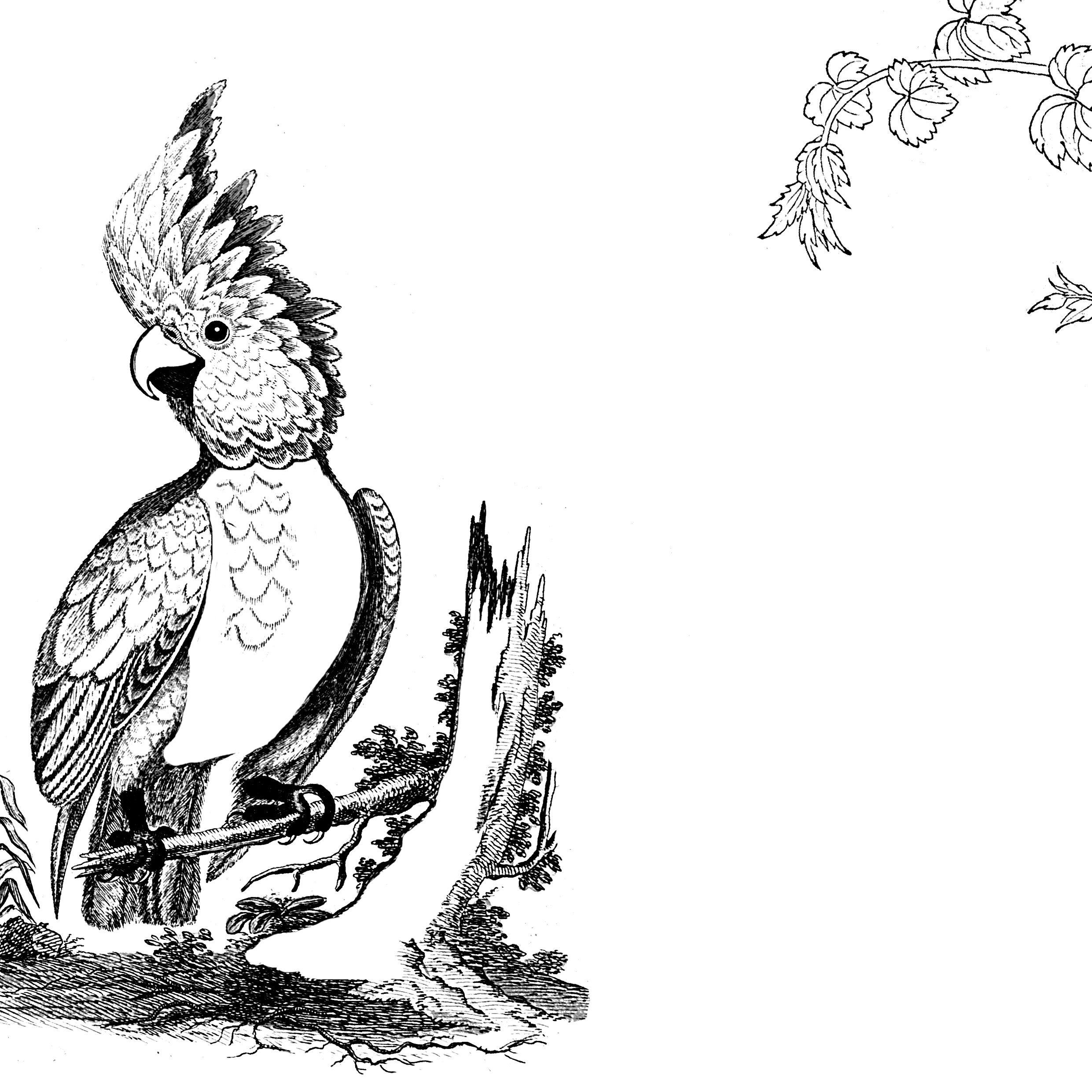 27 Coole Kakadu Malvorlage Beste Malvorlagen