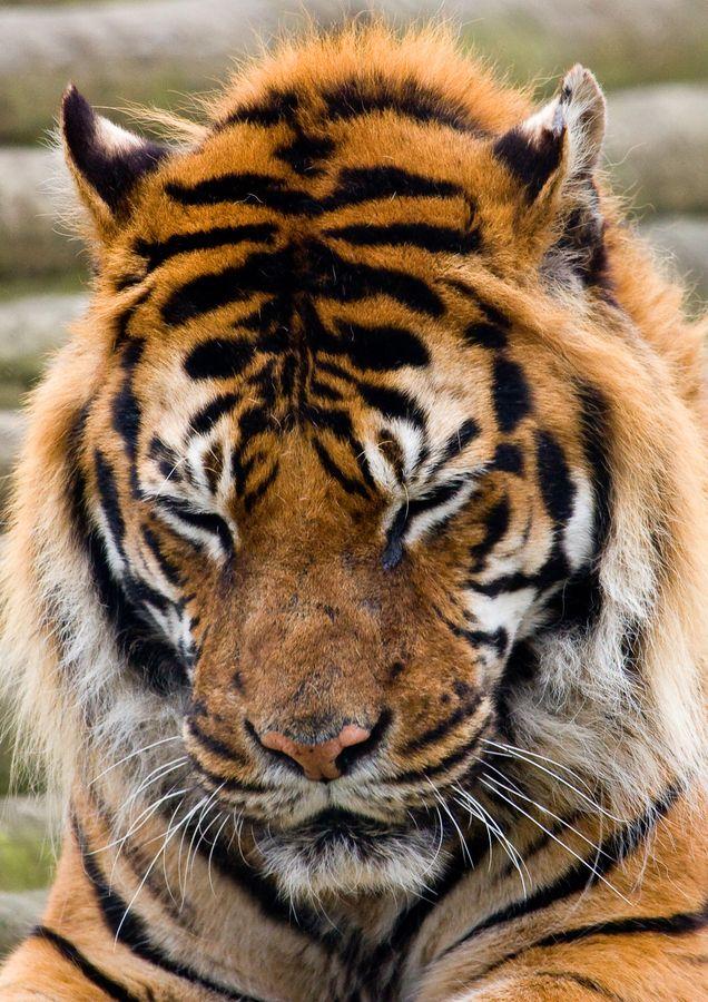 .This one, in particular! Animals wild, Animals, Big cats