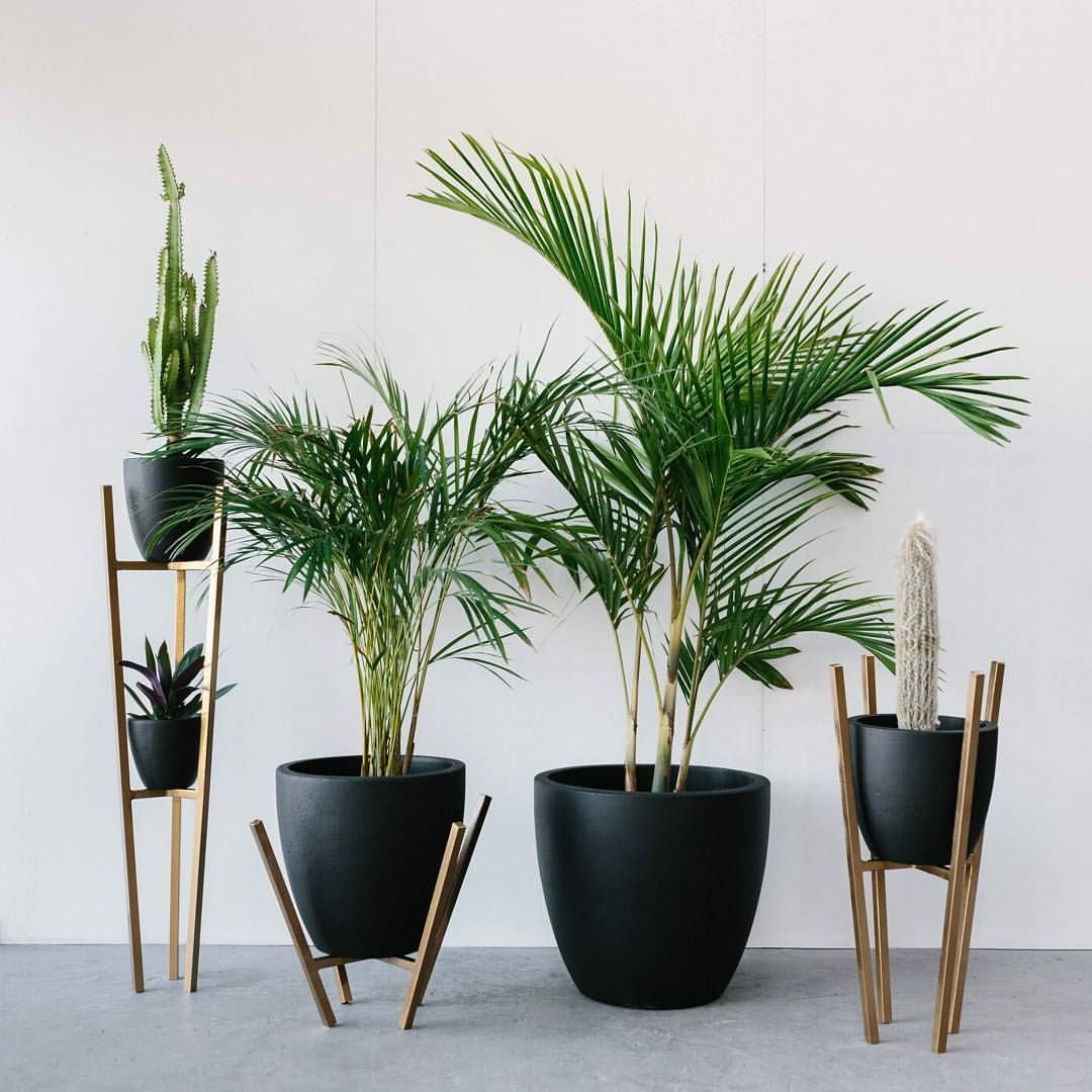 Get Your Black Concrete Planters Online Now Www Foxandramona Com Au And How Awesome Are These Planter St Plant Stand Indoor House Plants Decor Diy Plant Stand