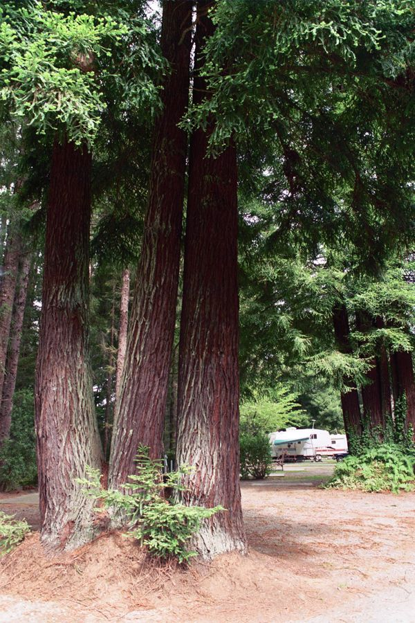 Village Camper Inn Crescent City Redwoods And Beach This Is Where My Parents Stay Up There Beautiful P Crescent City National Parks Redwood National Park