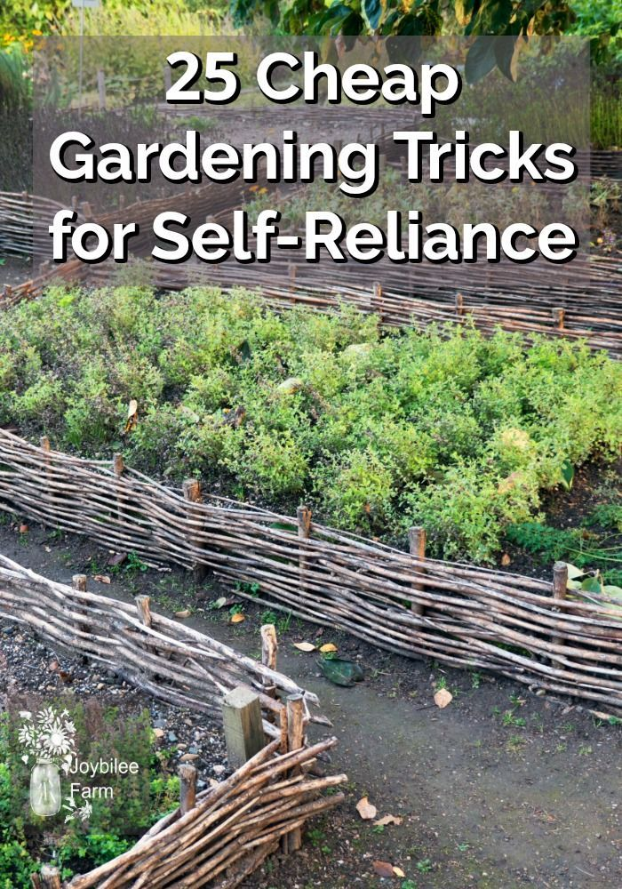25 Cheap Gardening Tricks for Self-Reliance |