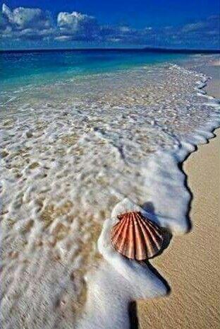 Arenamar Y Concha Sabbiamare E Conchiglia Granelli Di Sabbia