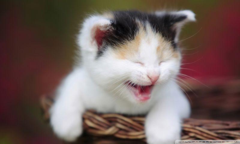 Cute Crying Kitty Hd Desktop Wallpaper Widescreen High Cute Baby Cats Baby Cats Crazy Cats