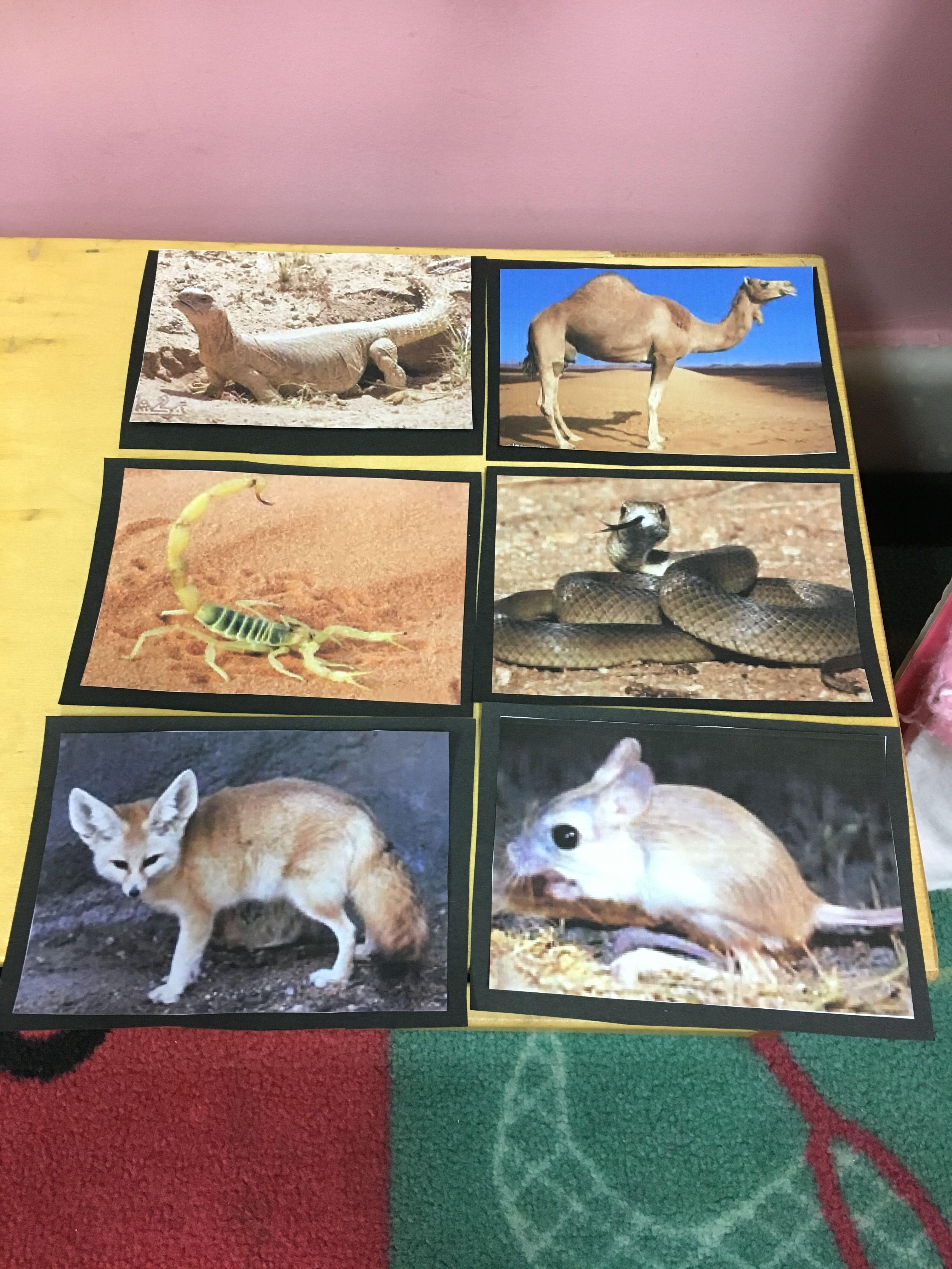 صور الحيوانات لحلقة الحيوانات الصحراوية Animals Painting Art