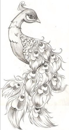 Peacock Tattoo Black And White Google Search Peacock Tattoo Sketches Drawings